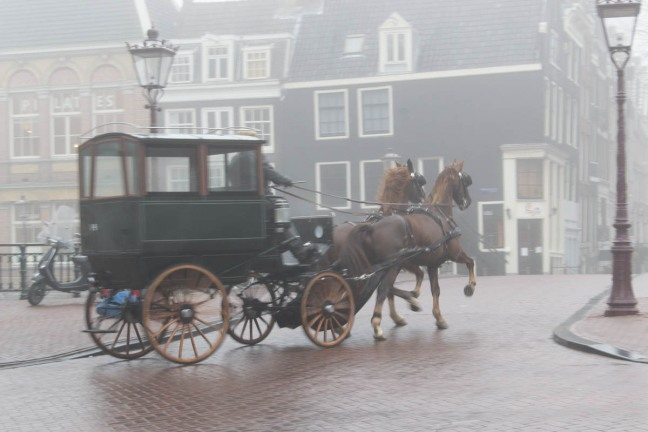 Horse Carriage Amsterdam