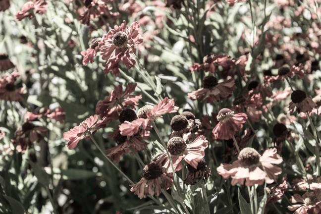 Gotland Flowers
