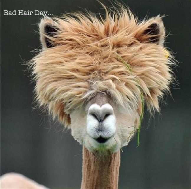 bad hair day repair methods
